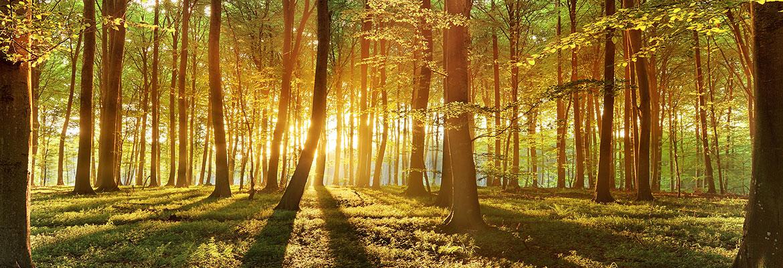 Summerlea Woods